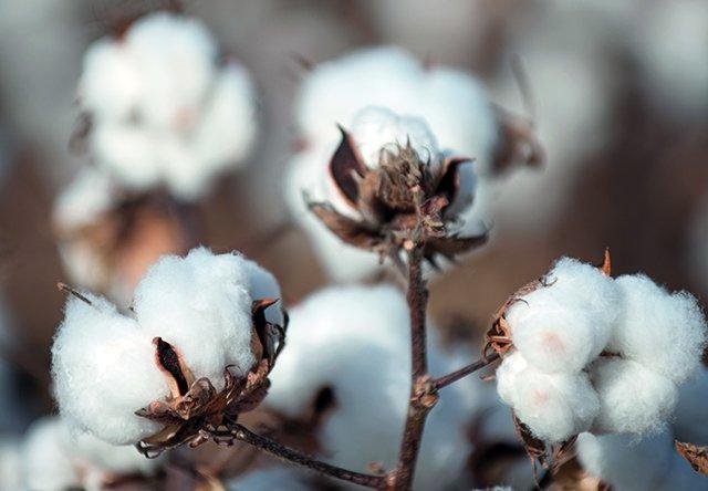 Завивка Baby Cottona Tencel White Boutique – Happy Dreams
